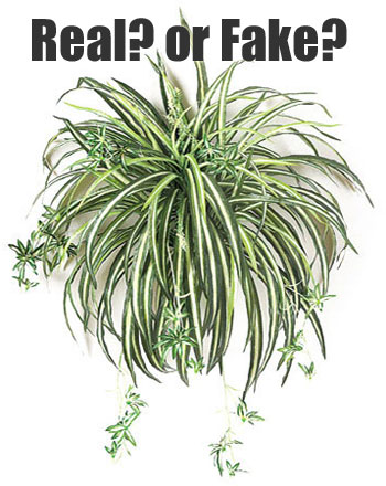 how to take care of hanging plants