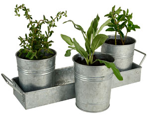 Galvanized Metal Planters From 2 To 5 A Bucket