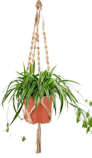 5 Macrame Plant Hanger For Indoor Spider Plants