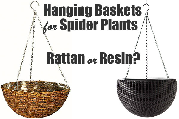Spider Plant Hanging Basket: Natural Rattan or Plastic Resin?