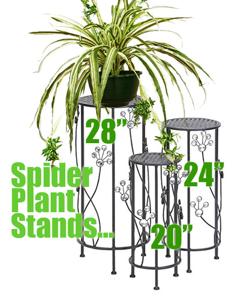 4 Spider Plant Stand Ideas How To Showcase Spider Plants